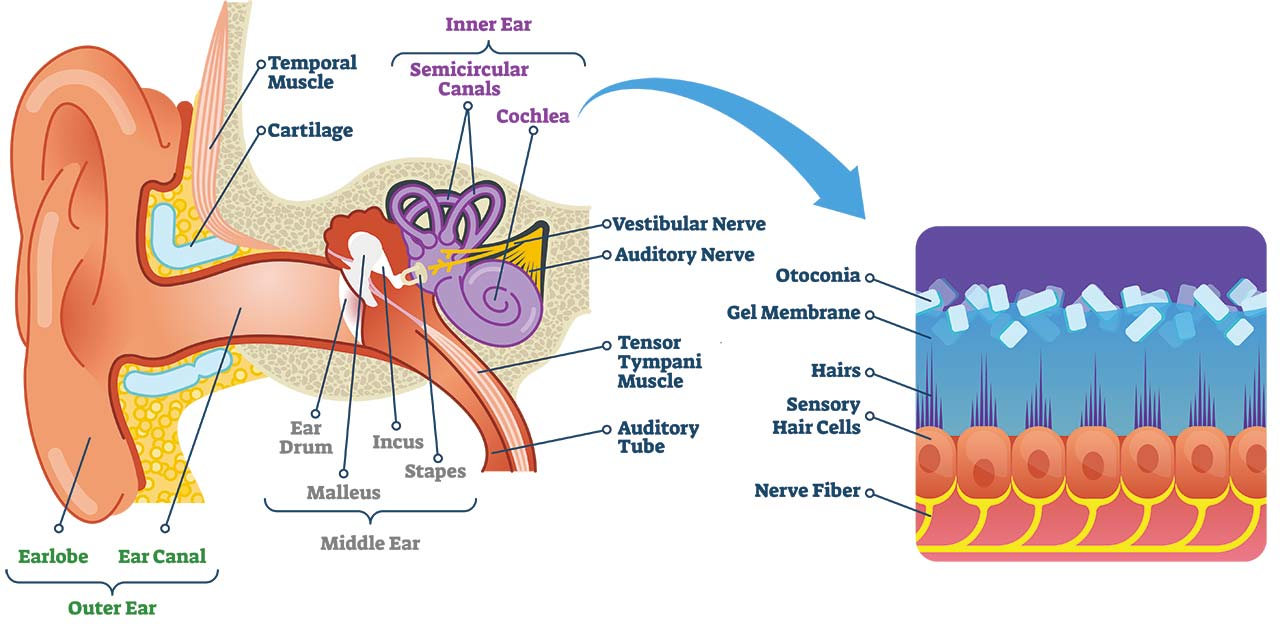 Dizziness Diagram